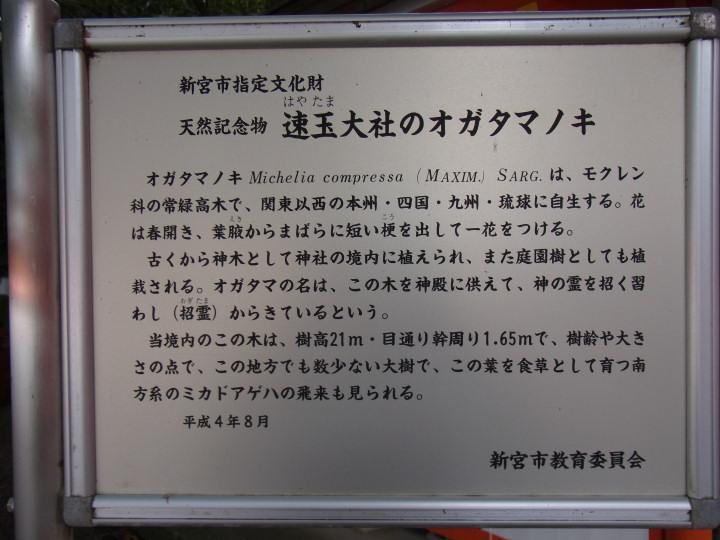 オガタマノキ-R0015090