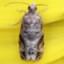 64-未同定の小さな蛾-IMG_3590