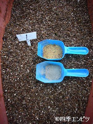 20110618 紅ジャガイモの収穫直後 元肥