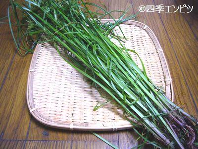 20110709 カヤツリグサ収穫