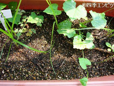 20110703 不明植物