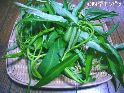 20110717 エンサイ 収穫