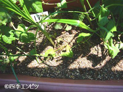 20110717 不明植物