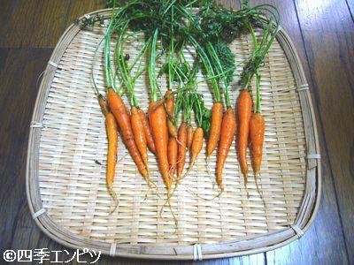 20110723 ベビーキャロット 収穫