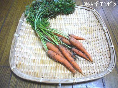 20110717 ベビーキャロット 収穫
