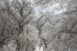 2014-01-11光輝く霧氷