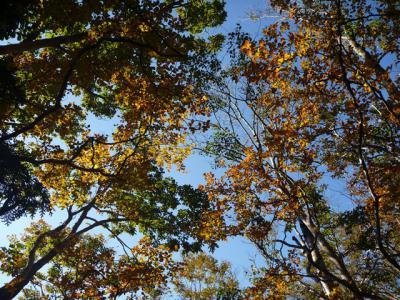 2012-10-21-037.jpg