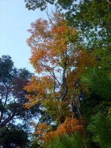 2013-10-27-128.jpg