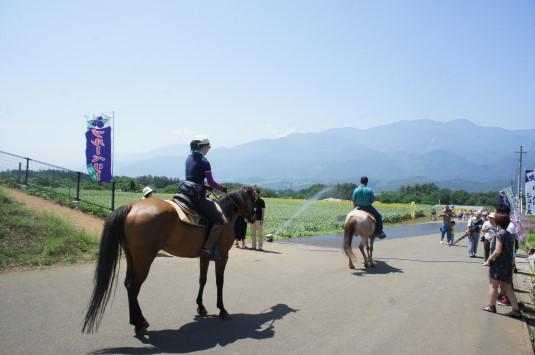 明野ひまわり 馬