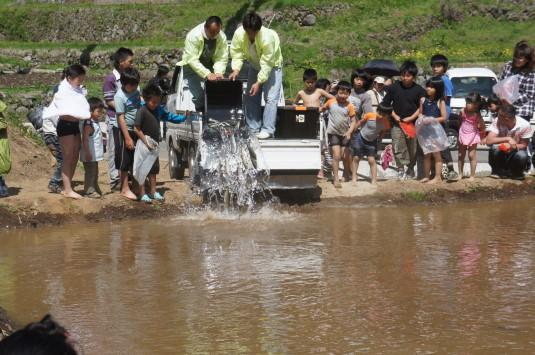 長沢鯉のぼり祭り2 つかみどり 鯉投入
