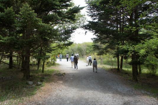 富士芝桜まつり 道