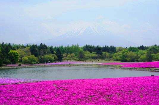 富士芝桜まつり 外観
