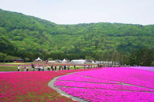 富士芝桜まつり 竜神池周辺