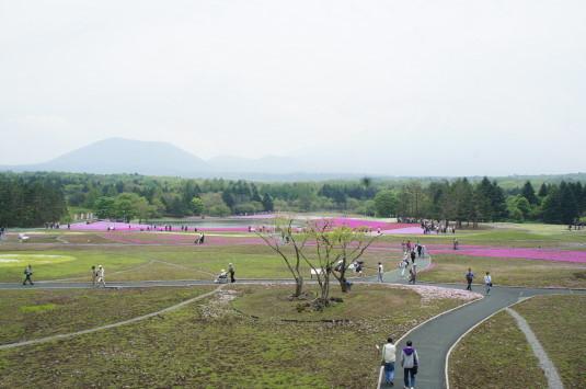 富士芝桜まつり 全体