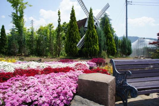 バラ 旅日記 風車