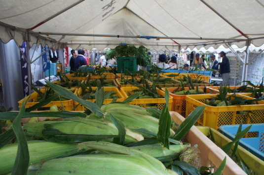 スイートコーン収穫祭 山積み