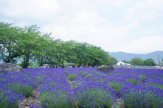 ハーブフェスティバル 八木崎公園