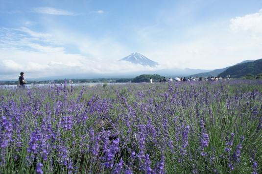 ハーブフェスティバル 大石公園 富士山