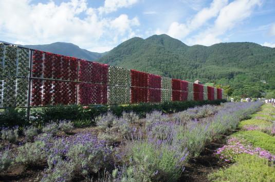 ハーブフェスティバル 大石公園 花のナイアガラ