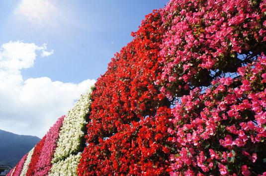 ハーブフェスティバル 大石公園 花のナイアガラ アップ
