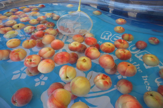 完熟桃食べ放題 プール