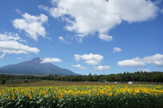 山中湖花の都公園 ひまわり 空