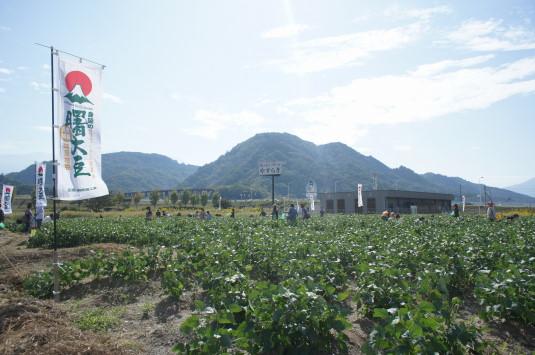曙大豆 収穫体験 外観