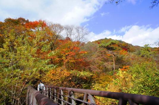 紅葉 吐竜の滝 橋の上