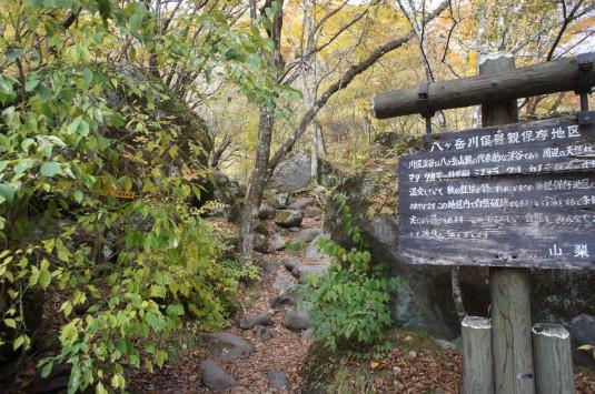 紅葉 吐竜の滝 奥へ