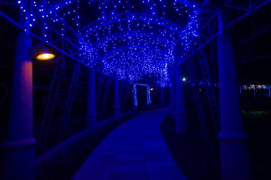 イルミネーション ハイジの村 バラの回廊 中