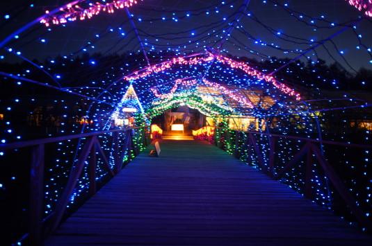 イルミ 山中湖花の都公園 橋2