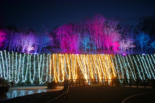 イルミ 山中湖花の都公園 滝