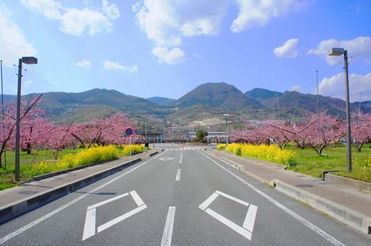 桃 春日居駅 駅前