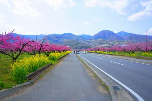 桃 ピーチライン 歩道