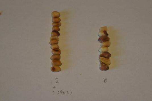 山家焼き ピーナッツの量