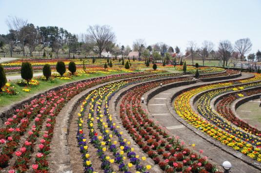 チューリップ ハイジの村 花壇