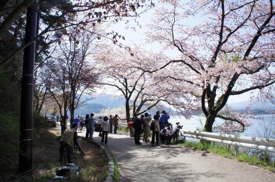 桜 長崎公園 カメラマン