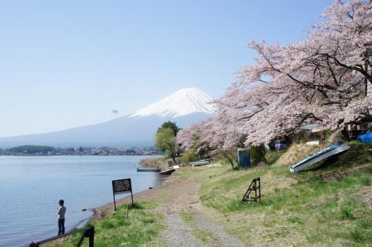 桜 長崎公園 湖畔