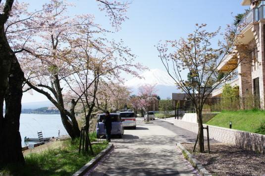 桜 長崎公園 遊歩道