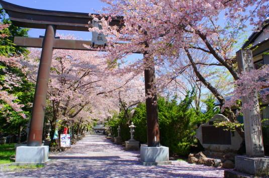 勝山やぶさめ祭り 浅間神社