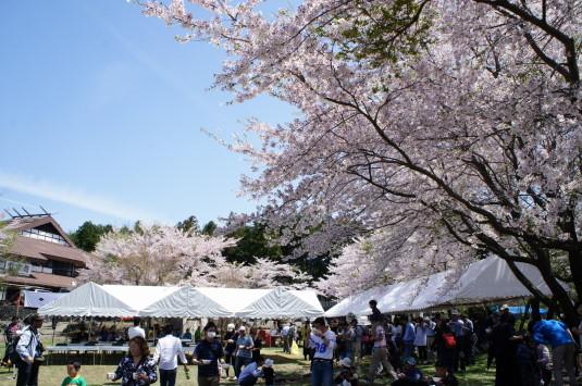 勝山やぶさめ祭り 会場 桜