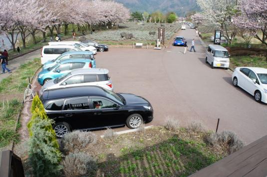 桜 八木崎公園 駐車場2