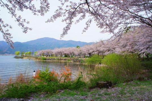 桜 八木崎公園 外観