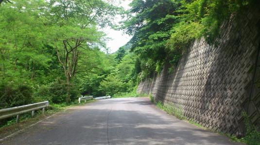レンゲツツジ 甘利山 道中1