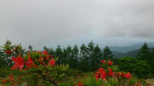 レンゲツツジ 甘利山 最初の群生 眺め