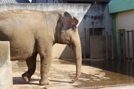 遊亀公園 象