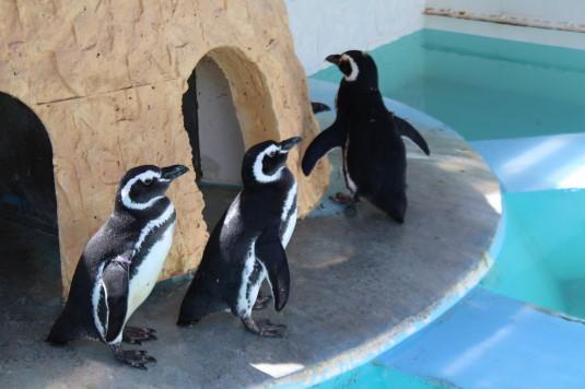 遊亀公園 ペンギン