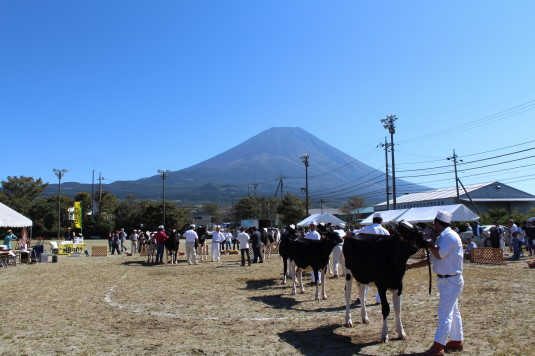 富士ヶ嶺ファームフェスタ 牛美人コンテスト 並ぶ