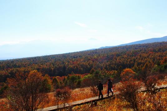 紅葉 美し森 細い道