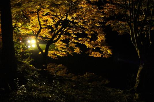 紅葉 伊奈ヶ湖 ライトアップ 近くから